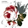 Morphologue - 'Flower Art Pictures'